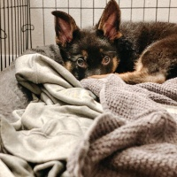 Happy Tails – Puppy Prep